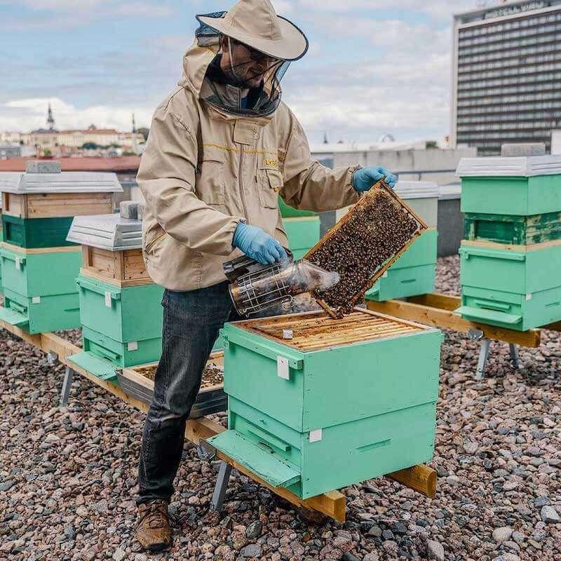 LHV mesilased
